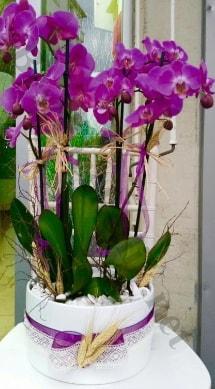 Seramik vazoda 4 dallı mor lila orkide  Diyarbakır çiçek yolla