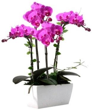 Seramik vazo içerisinde 4 dallı mor orkide  Diyarbakır çiçek online çiçek siparişi