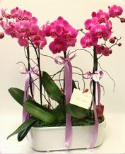 Beyaz seramik içerisinde 4 dallı orkide  Diyarbakır çiçek mağazası , çiçekçi adresleri