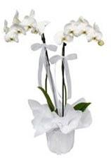 2 dallı beyaz orkide  Diyarbakır internetten çiçek siparişi