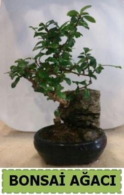 Bonsai ağacı japon ağacı satışı  Diyarbakır kaliteli taze ve ucuz çiçekler