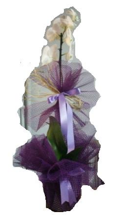 Tek dallı beyaz orkide süper kalite ithal  Diyarbakır yurtiçi ve yurtdışı çiçek siparişi