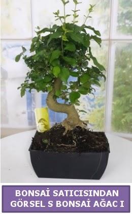 S dal eğriliği bonsai japon ağacı  Diyarbakır çiçek online çiçek siparişi