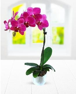 Tek dallı mor orkide  Diyarbakır çiçek online çiçek siparişi