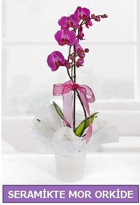 Seramik içerisinde birinci kalite tek dallı mor orkide  Diyarbakır cicekciler , cicek siparisi