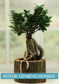 Kütük ağaç içerisinde ginseng bonsai  Diyarbakır uluslararası çiçek gönderme