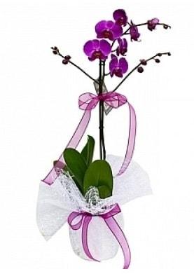Tekli Mor Orkide  Diyarbakır 14 şubat sevgililer günü çiçek