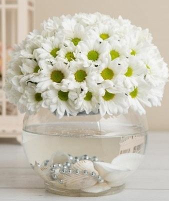 Fanusta beyaz Papatya  Diyarbakır çiçek online çiçek siparişi