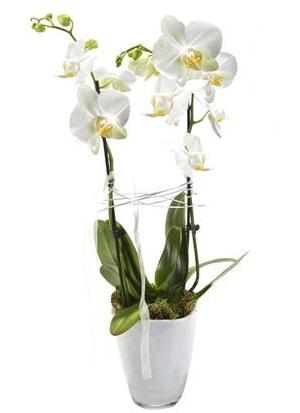 2 dallı beyaz seramik beyaz orkide saksısı  Diyarbakır uluslararası çiçek gönderme