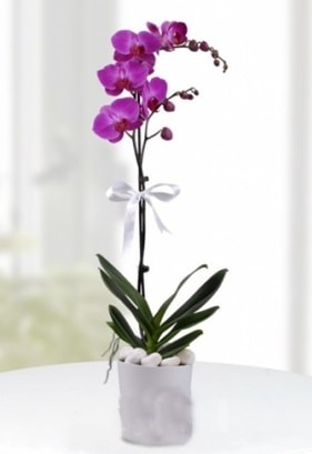 Tek dallı saksıda mor orkide çiçeği  Diyarbakır çiçek yolla , çiçek gönder , çiçekçi