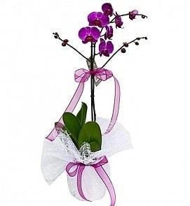 Tek dallı saksıda ithal mor orkide çiçeği  Diyarbakır çiçek yolla , çiçek gönder , çiçekçi