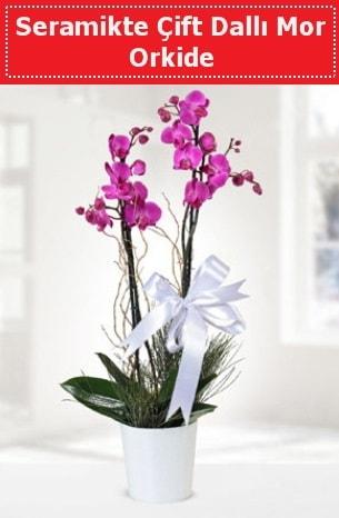 Seramikte Çift Dallı Mor Orkide  Diyarbakır ucuz çiçek gönder