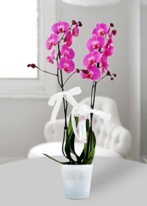 Çift dallı mor orkide  Diyarbakır çiçek yolla , çiçek gönder , çiçekçi