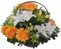 Diyarbakır online çiçek gönderme sipariş  sepet modeli Gerbera kazablanka sepet